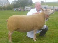 Interbreed Champion Sheep