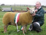 Interbreed Sheep Champion