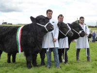 Winning Group of 3 Cattle to Ken Ellis and Sons
