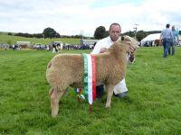 Champion Ram Lamb to Meirion Roberts