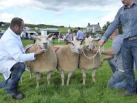 Interbreed Group of 3 to Meirion Roberts