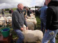 Barnu Wyn Hyrddod Defaid Mynydd Cymreig - Judging Welsh Mountain Ram Lambs