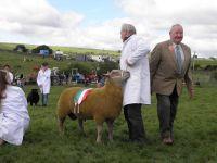 Pencampwr Defaid - Sheep Interbreed Champion