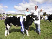 Llo Tarw Gorau - Best Bull Calf