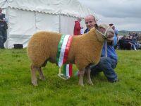 Ram Lamb Interbreed Champion