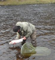 Salmon River Spey
