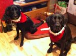 Meg and Cujo in their Christmas outfits