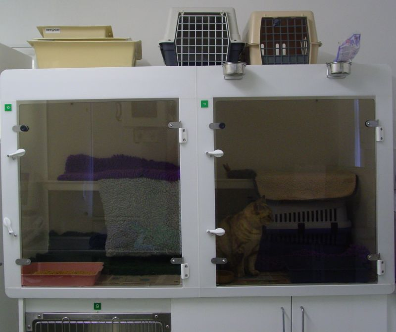 We have separate cat kennels at Park Vets to help make your cat's stay with us