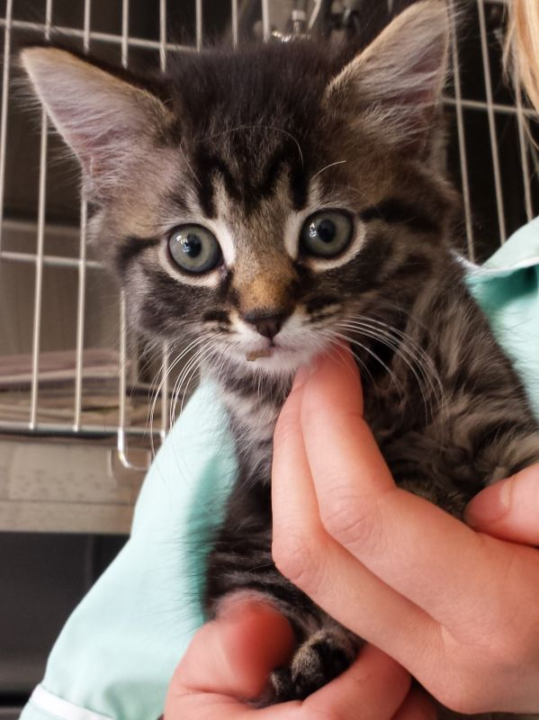 We hope to make your kitten's first visit to Park Vets West Wimbledon a happy one