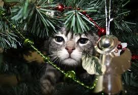 Pet Hazards at Christmas