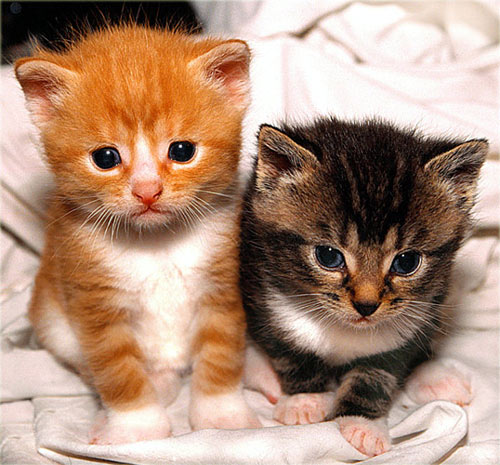 We can help you decide what to feed your kitten at Park Vets Raynes Park