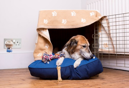 A great way to make a safe den for your dog