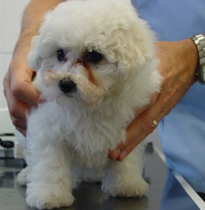 We hope to make your puppy's first visit to Park Vets West Wimbledon a happy one!