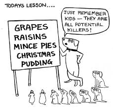 Grapes and raisins are poisonous to dogs